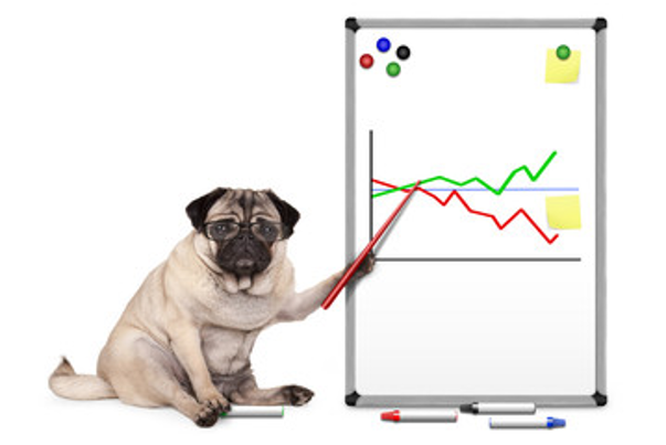 pug with pointer showing freshpet